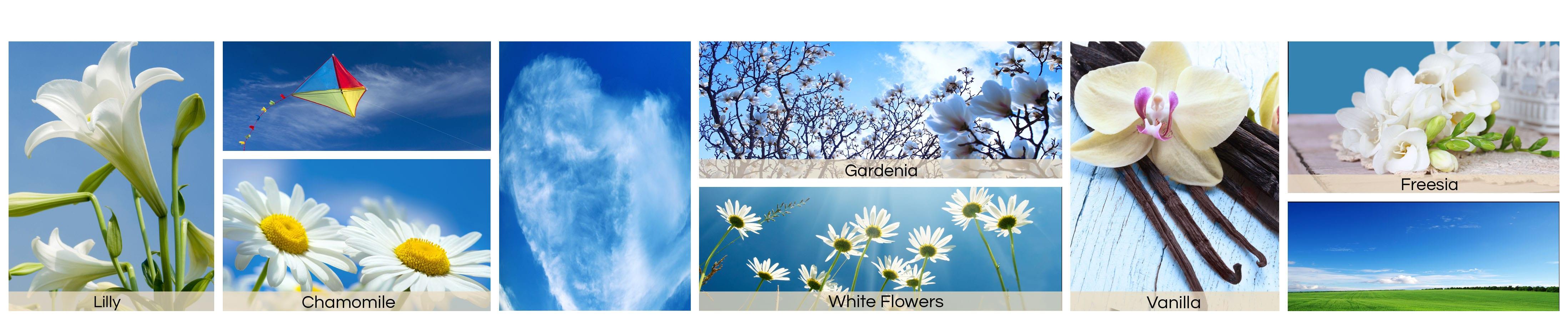 cerulean-sky-jpg576030eb801ca-min591c011841091