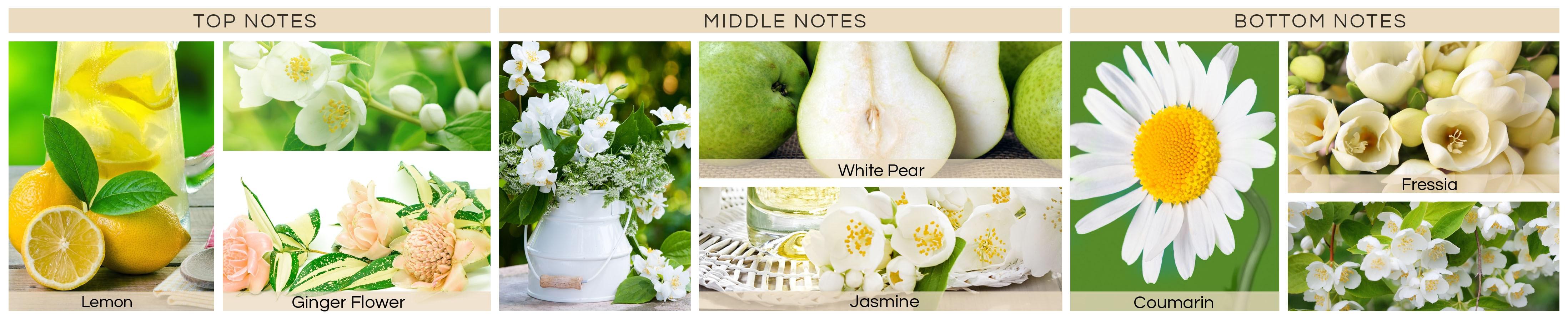 white-jasmine-and-fr576030ebd1807-min