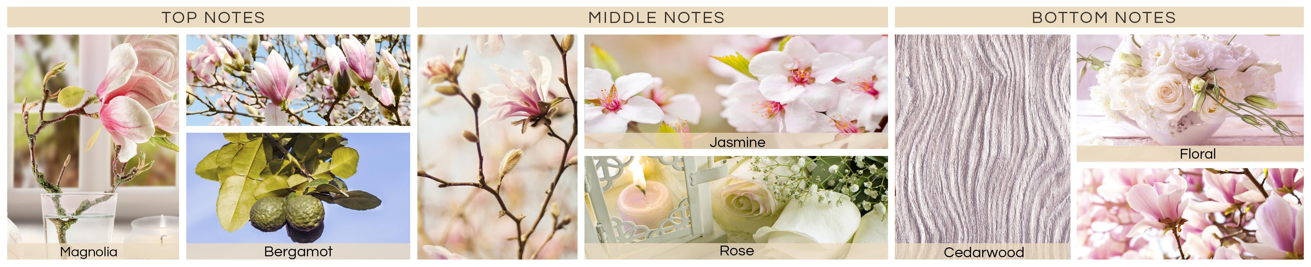 magnolia-blossom-jpg57602d1fc2270-min591c013768d5b